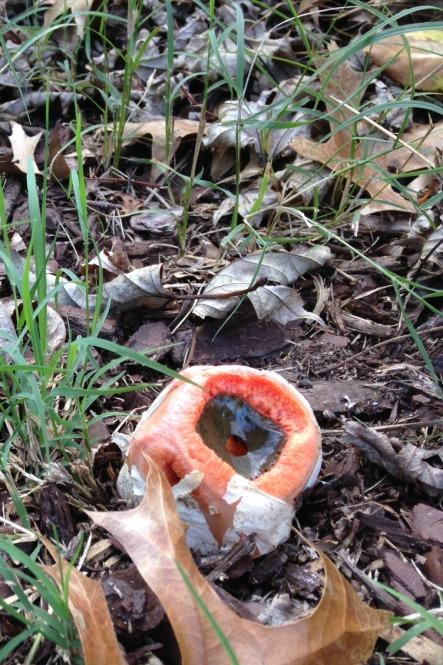 weird fungi a1