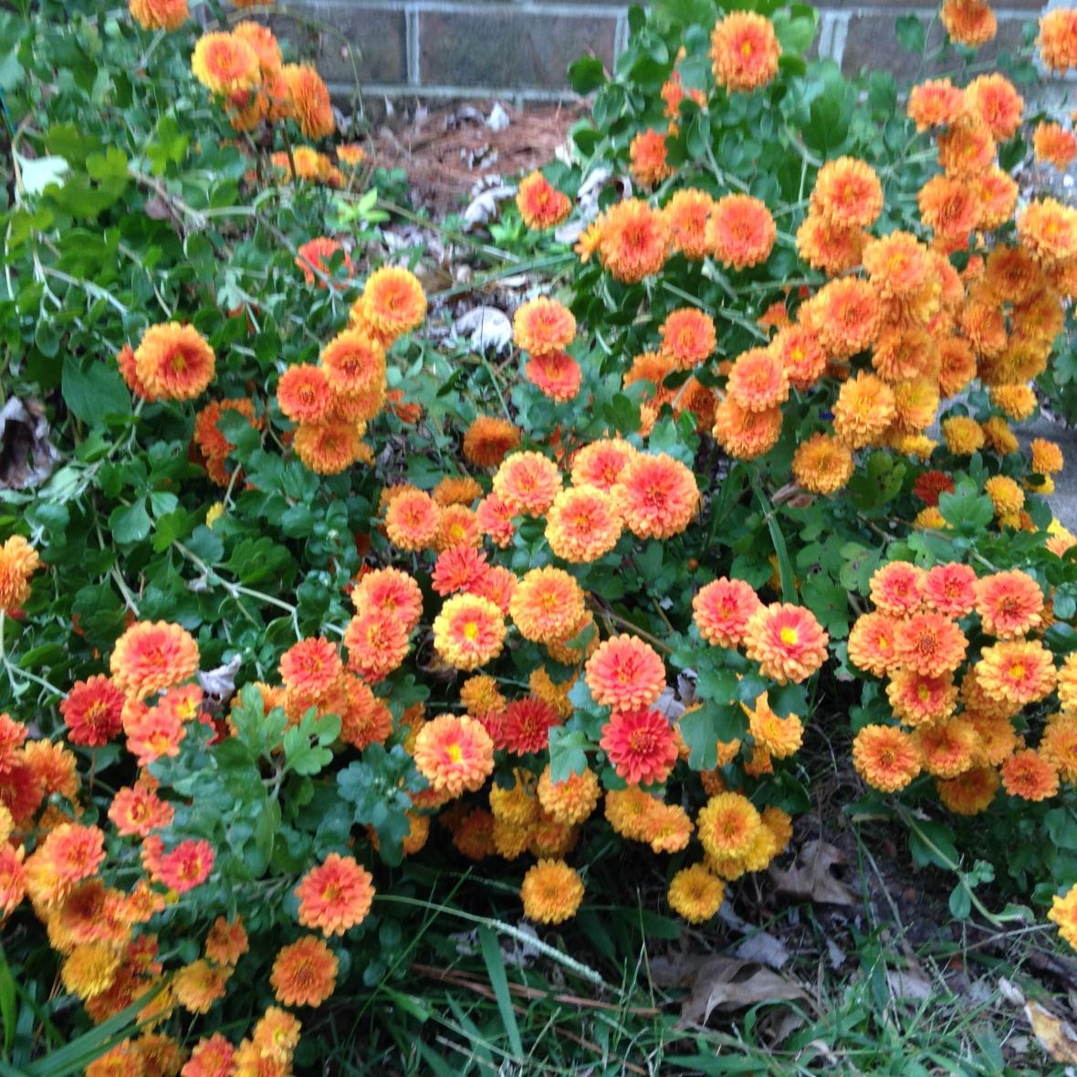 0410 sunset orange